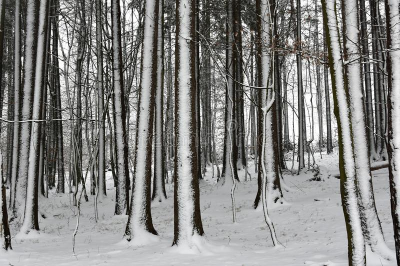 Winter in the woods stock photos
