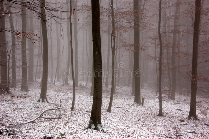 Winter woood with fog royalty free stock image