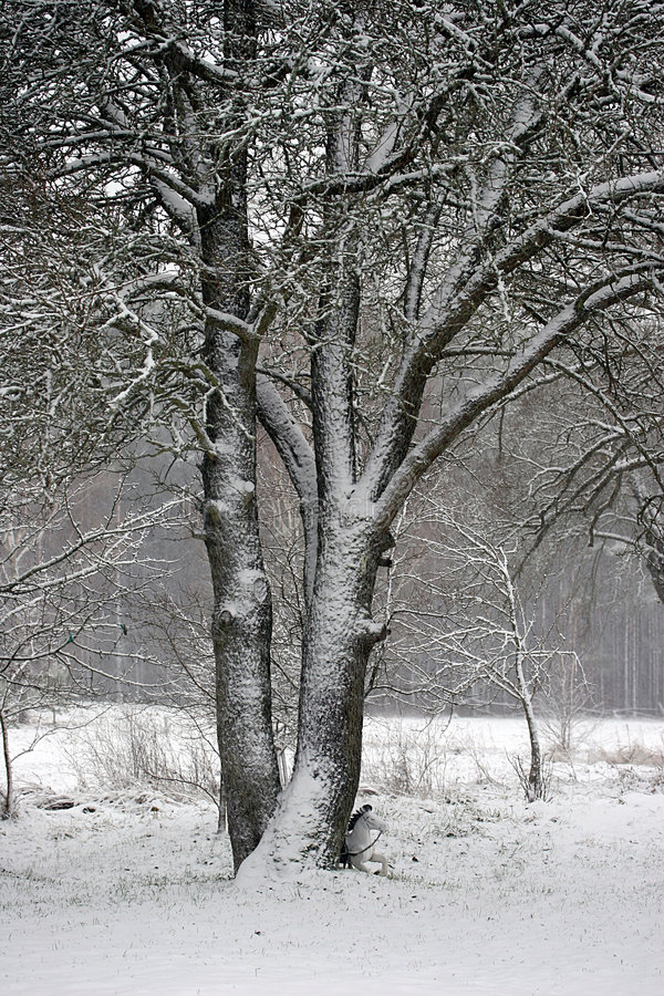 Winter1 royalty free stock images