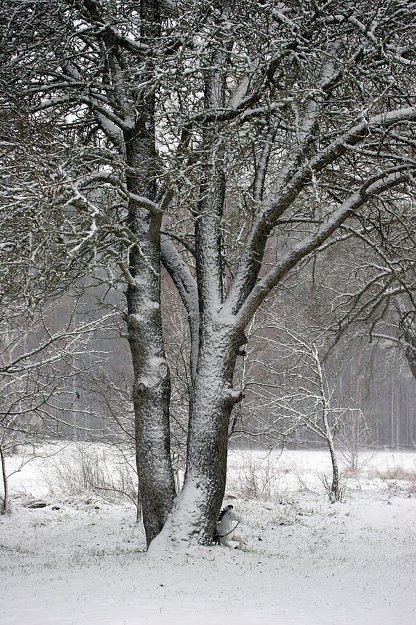 Winter1 images libres de droits