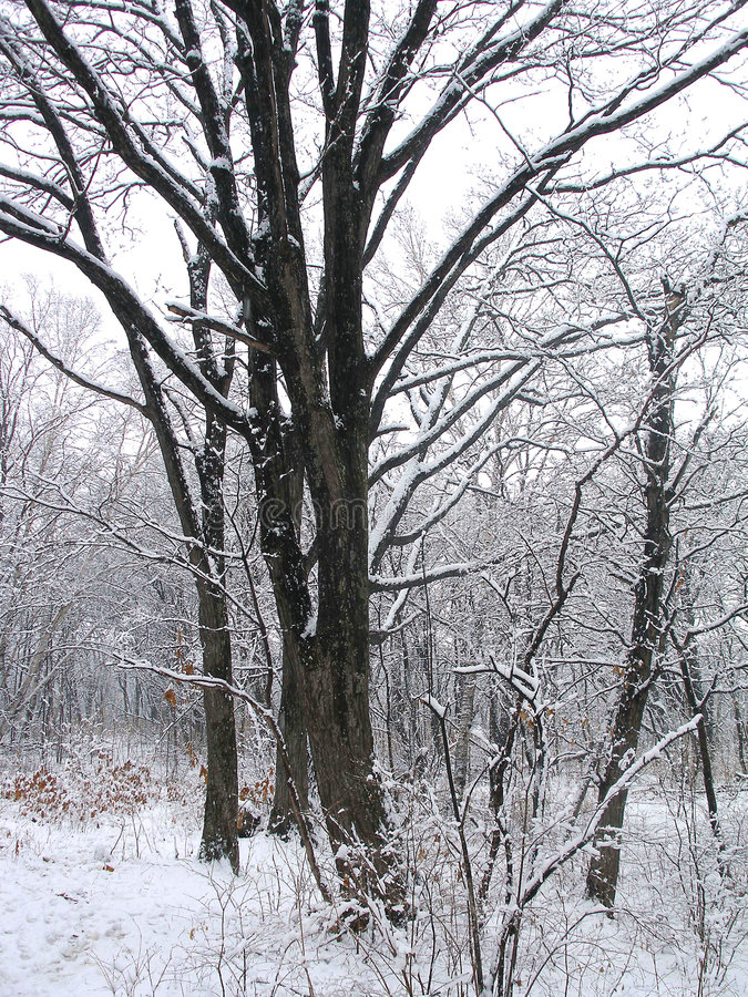 Winter4 fotografia stock libera da diritti