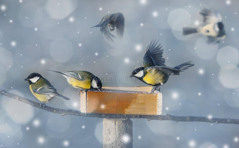 Winterabbildung mit Vögeln stockfoto