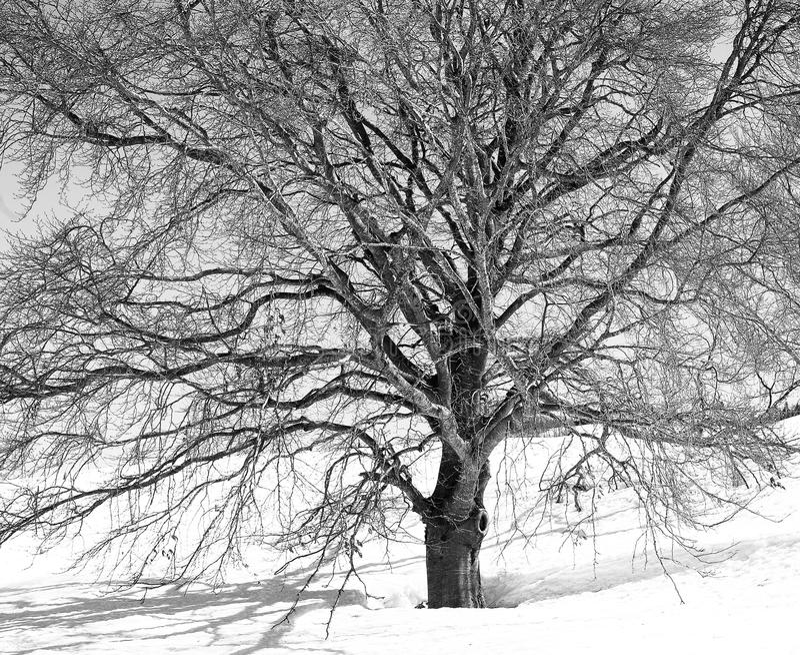 Winteradern Stockfotografie