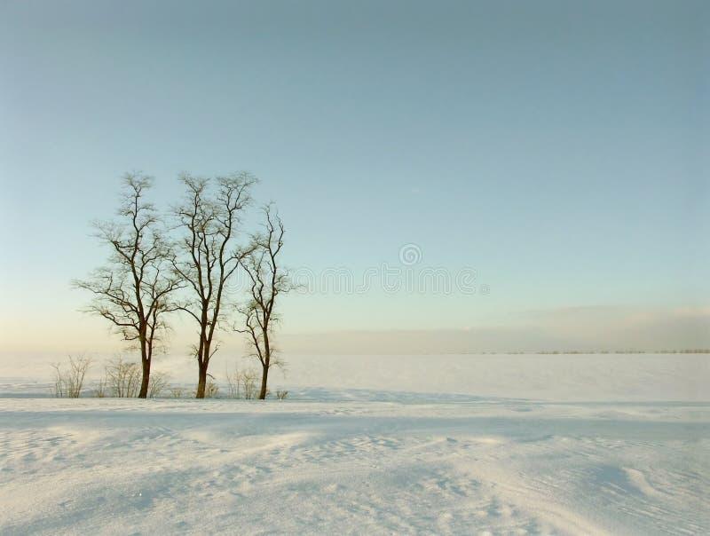Winterbäume auf dem Feld stockfotos