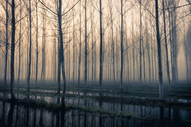Winterbäume, die im Wasser reflektieren lizenzfreie stockbilder