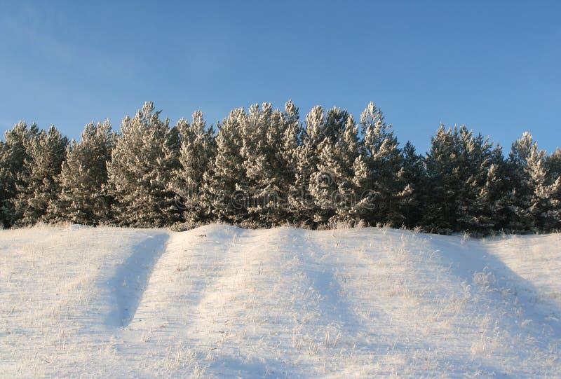 Winterbäume in einem Winterholz lizenzfreies stockbild