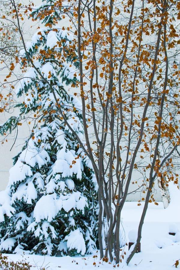 Winterbäume im Schnee lizenzfreie stockfotos