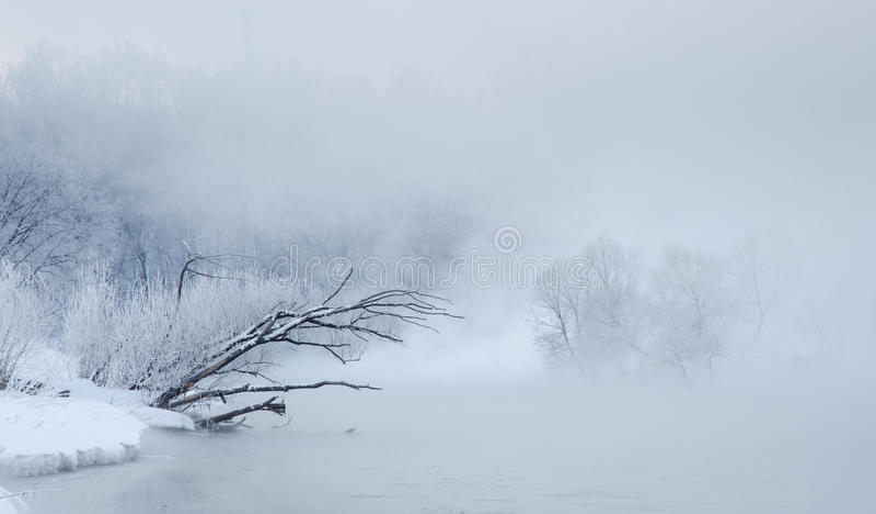 Winterbäume nahe einem Fluss bedeckt mit Hoar am Morgen stockbilder