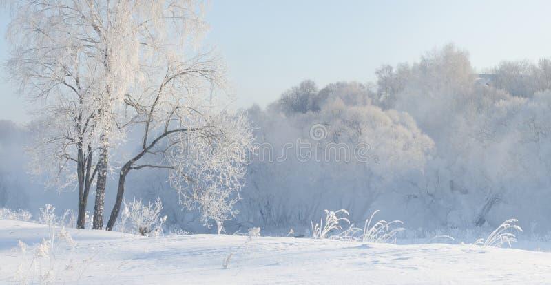 Winterbäume nahe einem Fluss, der mit Hoar am Morgen bedeckt wurde, beleuchteten mit lizenzfreies stockfoto