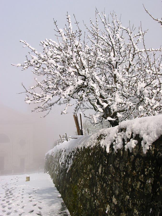 Download Winterbaum stockbild. Bild von pfad, spuren, nebelig, ruhe - 34877