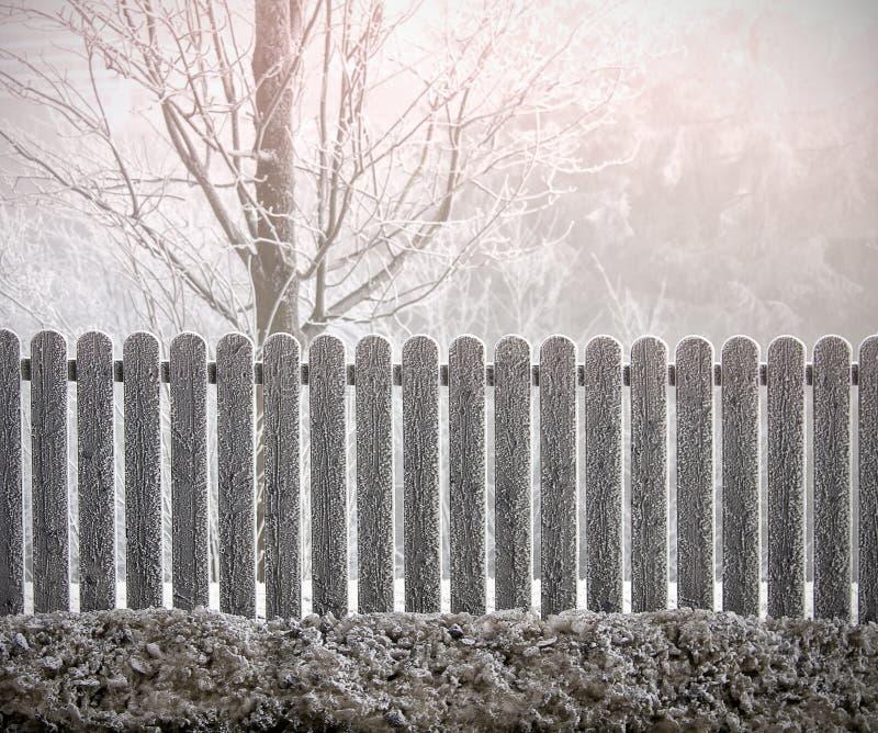 Winterbaum hinter dem Zaun lizenzfreies stockfoto