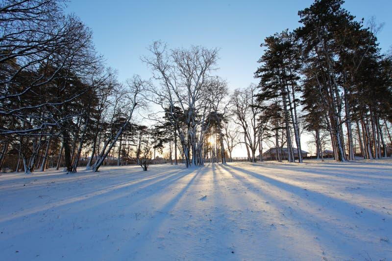 Winterbaum mit Sonnenstrahlen stockfotografie