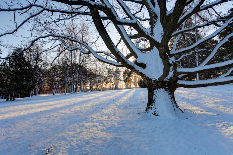Winterbaum mit Sonnenstrahlen lizenzfreies stockfoto
