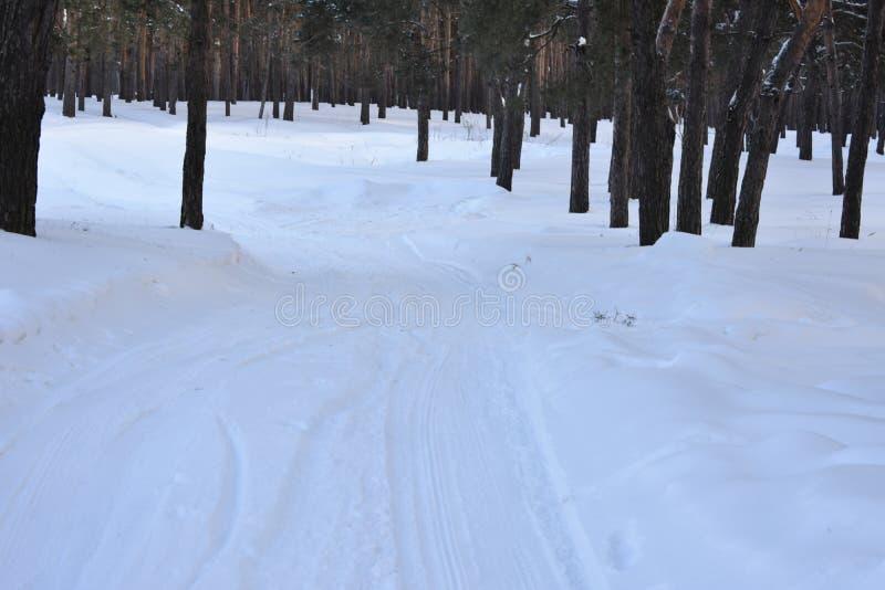 Winterbaumkiefer lizenzfreies stockbild