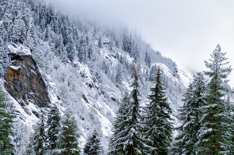 Winterberglandschaft - eine Ansicht der Berge, umfasst mit Kiefer und Schnee, eine Wolke fällt auf die Spitze lizenzfreie stockfotos