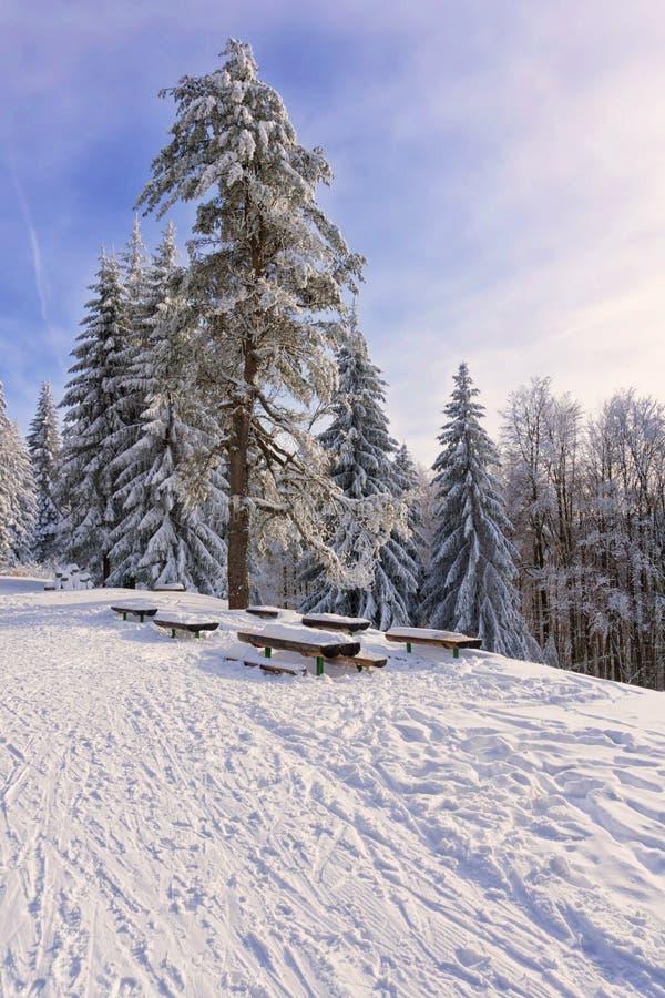 Winterberglandschaft mit hoher einsamer Kiefer lizenzfreies stockfoto