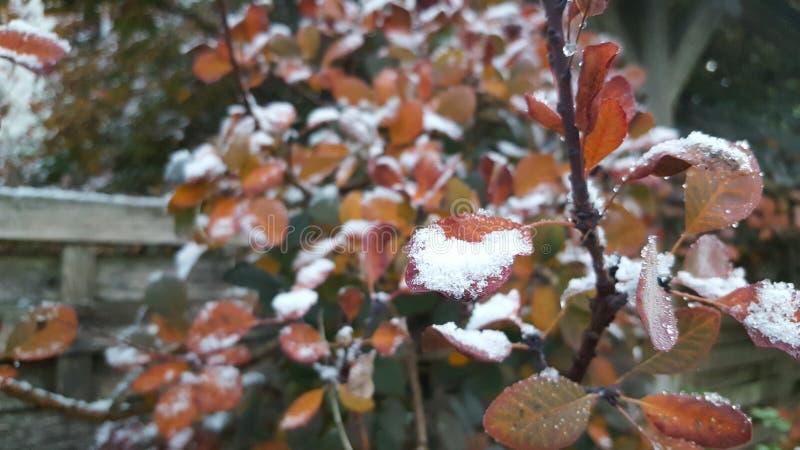 Winterblätter mit Frost und Schnee lizenzfreie stockbilder