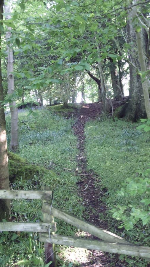 Winterborne woods stock photos