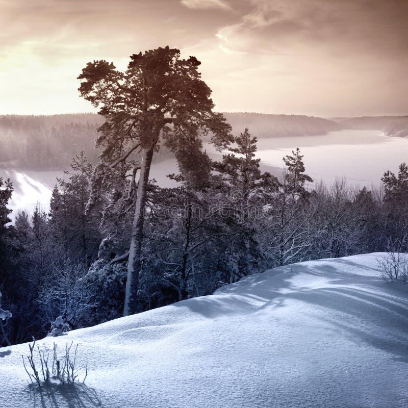 Winterday froid photo libre de droits
