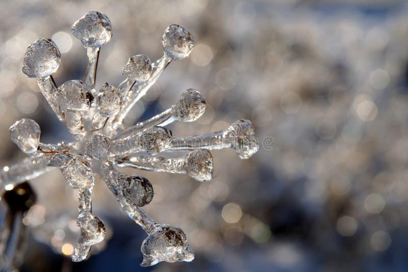 Winterdiamanten stockfotos