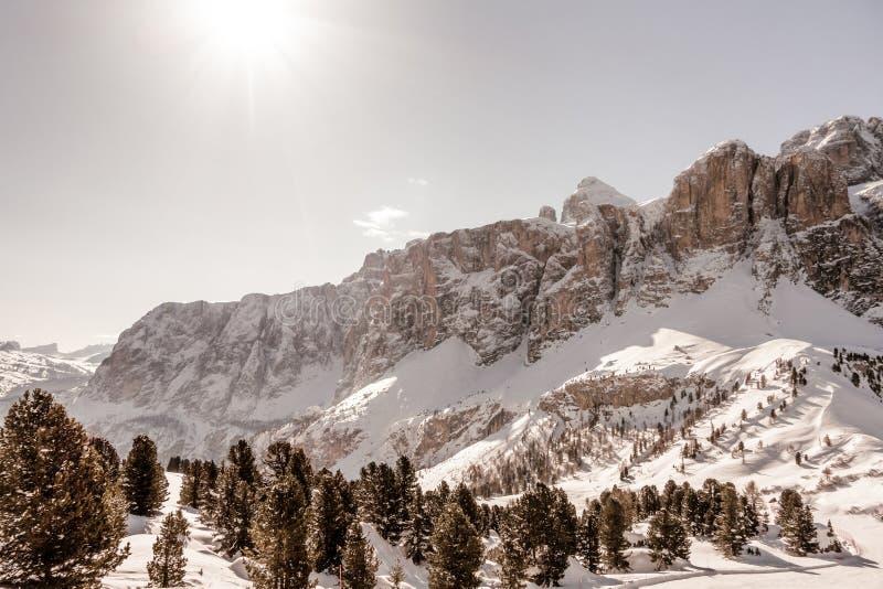 Winterdolomitwald stockfotos