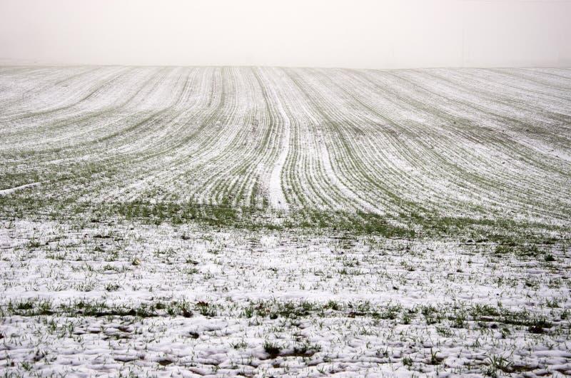 Winterernte-Weizenfeld bedeckte Schnee und dunklen Morgennebel lizenzfreies stockbild