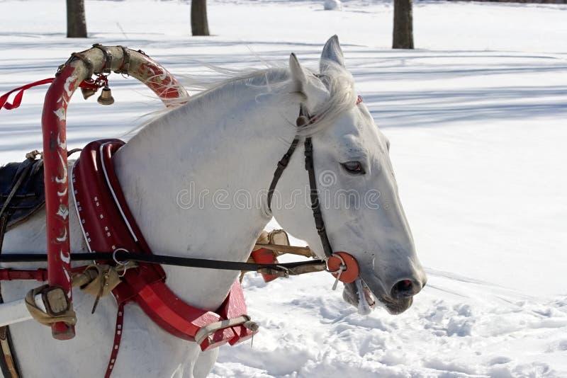 Winterfeiertag lizenzfreies stockfoto