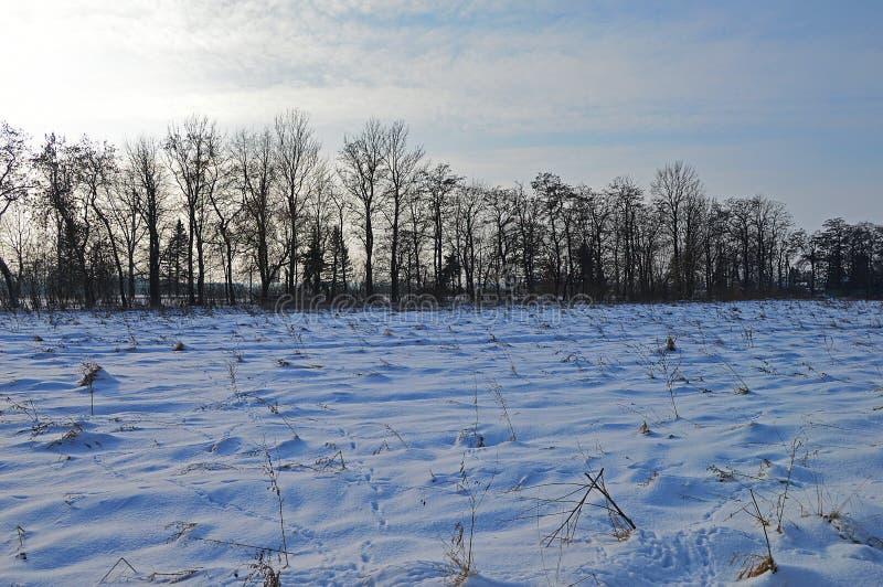 Winterfelder und -bäume in der Landschaft stockbild