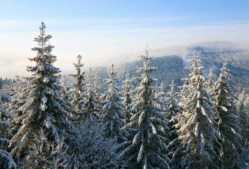 Winterfichten im Berg lizenzfreies stockfoto