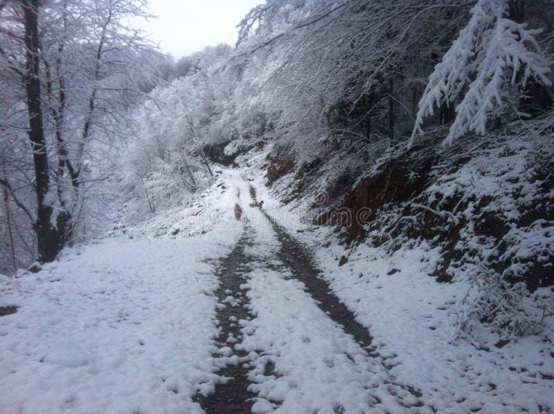 Winterflüstern lizenzfreie stockfotos