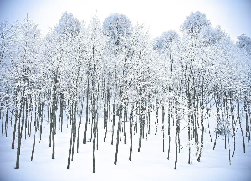 Winterforest- hillsschnee Kartepe, Kocaeli, die Türkei lizenzfreie stockfotos