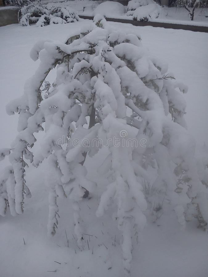 Winterfoto lizenzfreie stockbilder
