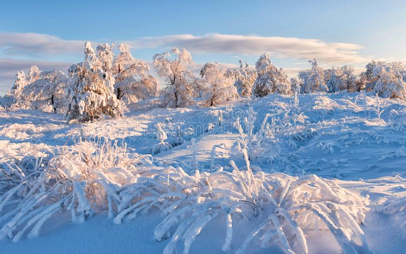 Winterfrostwald und -gras stockfotos