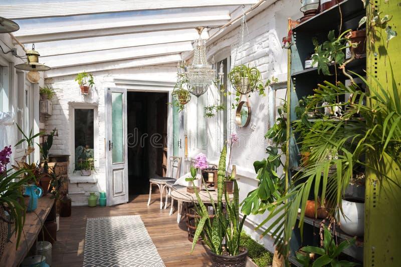 Wintergarden с сериями заводов Космос в доме для релаксации с цветками Садовничать, веранда в деревенском стоковое изображение