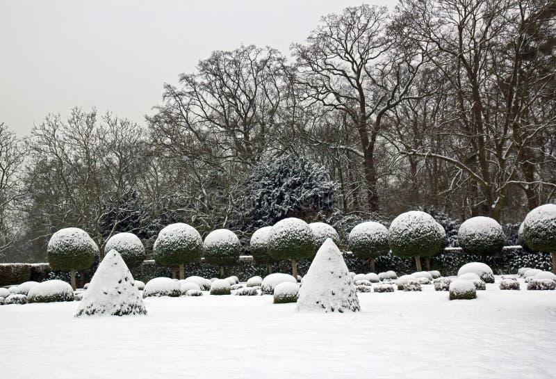 Wintergarden, buxo e teixos sob a neve foto de stock royalty free