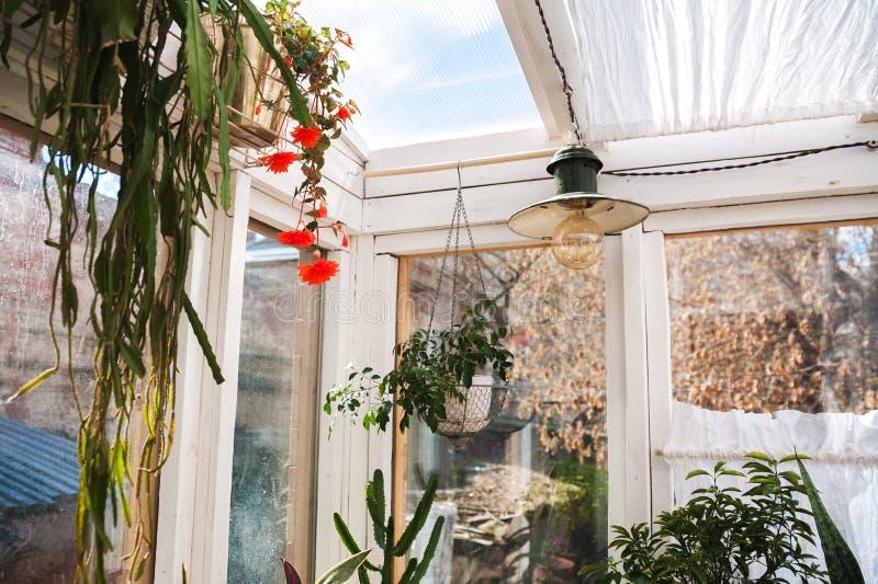 Wintergarden med massor av växter Utrymme i huset för avkoppling med blommor Arbeta i trädgården veranda i lantligt royaltyfri bild
