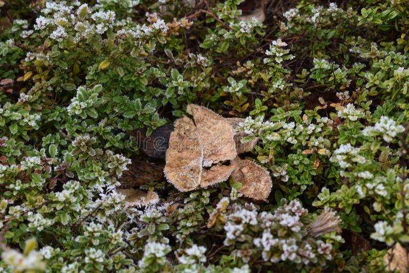 Wintergarden och dess skönheter royaltyfria foton