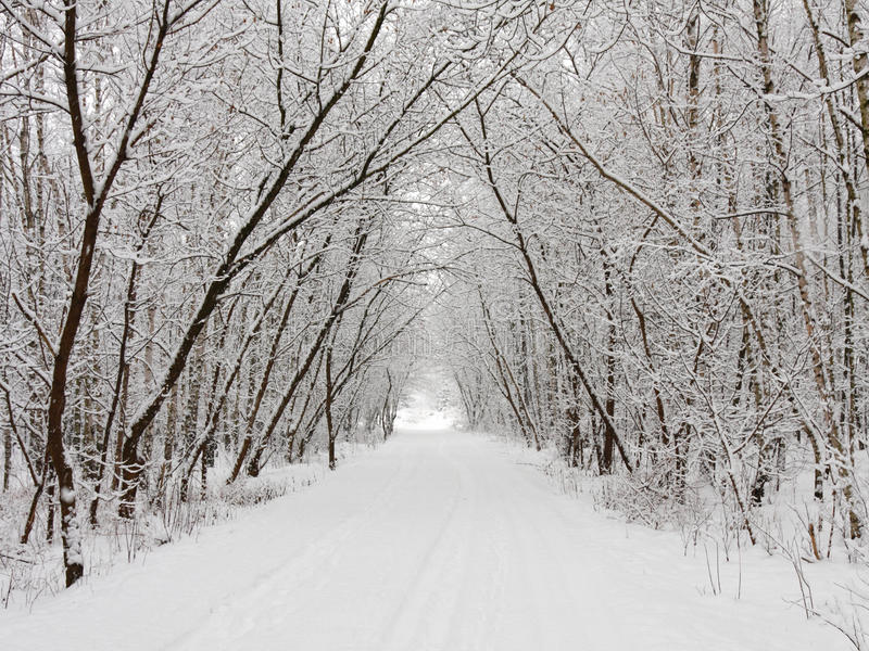 Wintergasse lizenzfreie stockbilder
