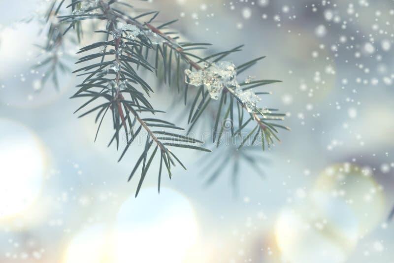Winterhintergrund mit bokeh und meltin Eis auf Niederlassung stockbild