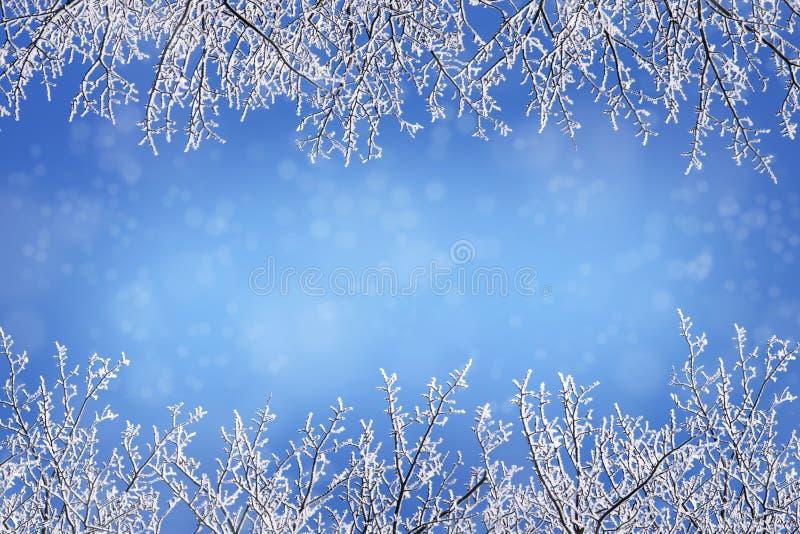 Winterhintergrund mit Rahmengrenzen vom Schnee bedeckte bloße Kleie lizenzfreie stockbilder