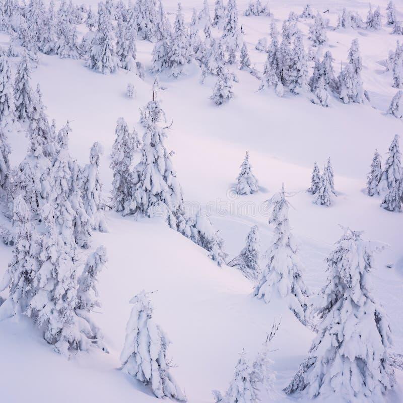 Winterhintergrund, schneebedeckte Tannen auf der Gebirgsseite stockbilder