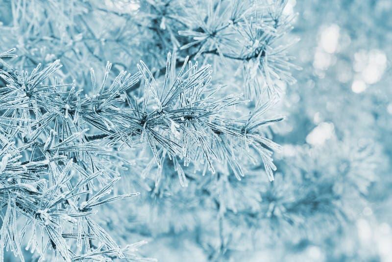 Winterhintergrund von der Kiefer bedeckt mit Reif, Frost oder Raureif in einem schneebedeckten Wald lizenzfreie stockbilder