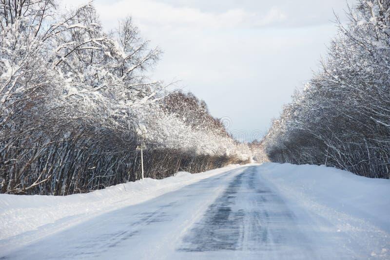 Winterholz stockbild