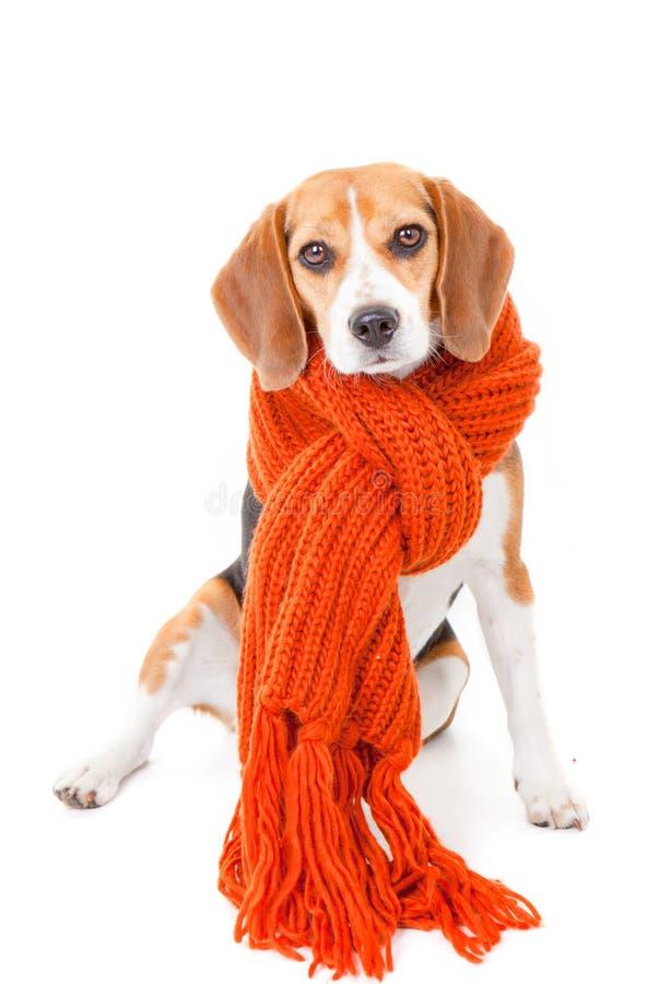 Winterhund stockfotografie
