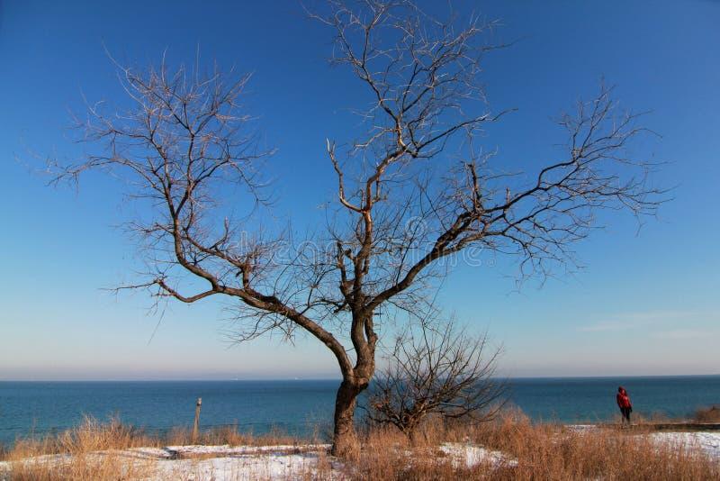 Winterin Odessa, árbol de Ucrania, nieve y el Mar Negro imagenes de archivo