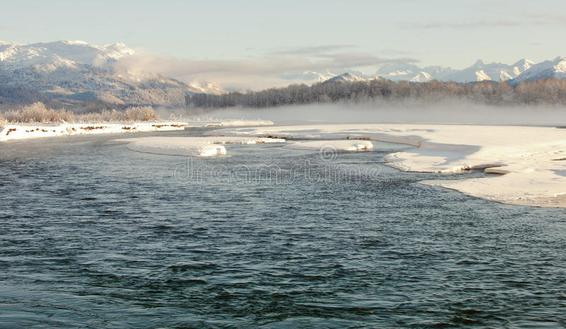 wintering реки chilkat стоковые изображения rf