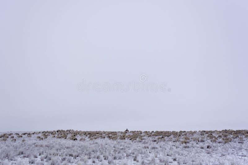 wintering minimalism Cielo gris monocromático Pastor con una multitud Hogar nómada Kazajistán fotos de archivo