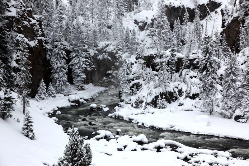 Winterjahreszeit in Yellowstone lizenzfreie stockbilder
