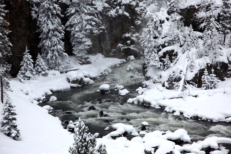 Winterjahreszeit in Yellowstone stockbilder