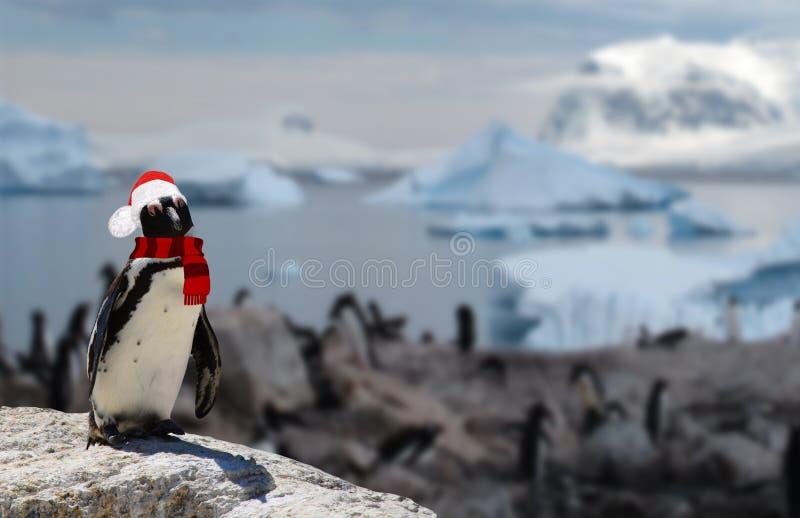 Winterkonzept ein lustiger Pinguin, der einen Weihnachtsmann-Hut und -schal mit seiner Pinguinfamilie auf dem Hintergrund trägt stockbild